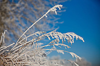 There was an amazing thick frost all over everything in Calgary and I was lucky enough to go out for a walk before it all melted away...