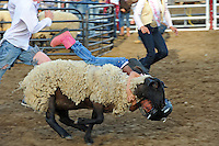 """Hanging on for dear life at the mutton bustin' contest at Thursday's """"Tough Enough To Wear Pink"""" night at the 2014 California Rodeo Salinas."""