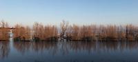 Swamp, marsh. (51164 x 22924 pixels)