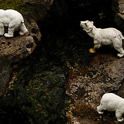 Polar bears in zoo at bekonscot model village.
