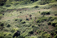 horses in a field n the beautiful typical brazilian city of buzios near rio de janeiro in brazil