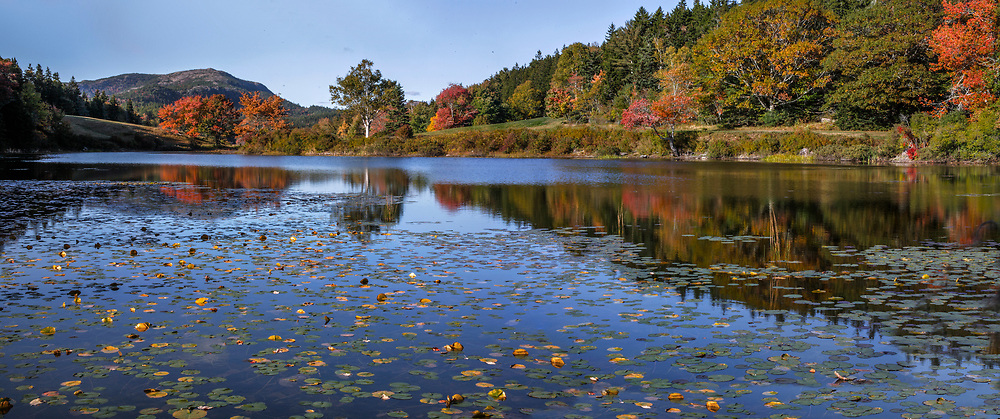 Lily Pads on Little Long Pond, Acadia National Park, Maine