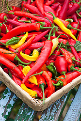 Mixed chilli peppers in a basket