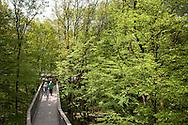 Europa, Deutschland, Nordrhein-Westfalen, Bergisches Land, Waldbroel, Baumwipfelpfad im Naturerlebnispark Panarbora. - <br /> <br /> Europe, Germany, North Rhine-Westphalia, Bergisches Land region, Waldbroel, canopy walk at the nature park Panarbora.