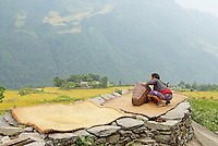 Nepal. Vallee de l Arun. Region Est du Nepal. Sechage du riz. // Nepal. Arun valley, East Nepal. Drying rice.