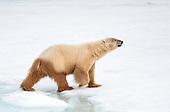 Svalbard Almost