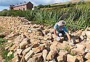 Man working building a dry stone wall near Abbotsbury, Dorset, England, UK