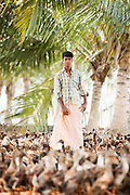 A young duck herder near Alappuzha in the Kerala Backwaters, India