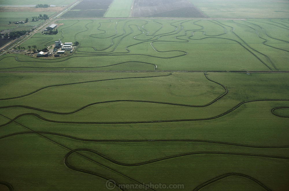 Rice: Aerial photograph of rice fields near Yuba City, California, USA. 1984.