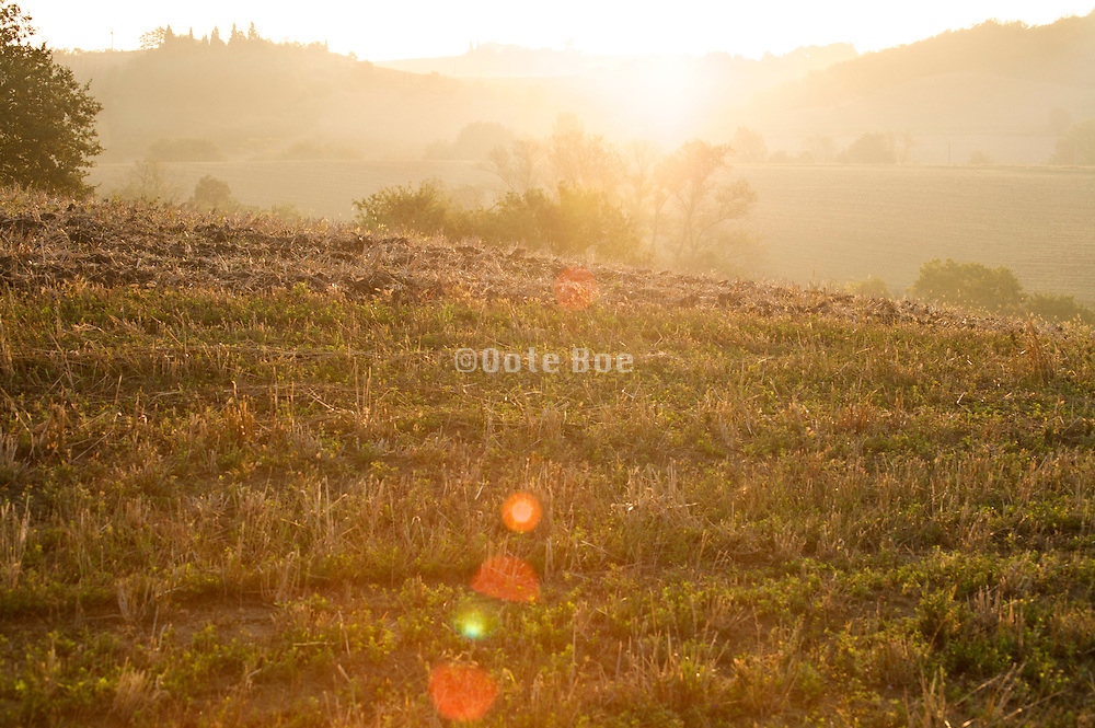early morning sun shining over a harvested field