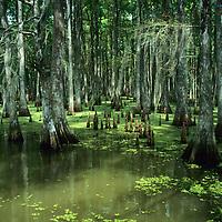 Bayous -Louisiana, USA