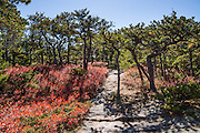 Mt. Sauveur Trail. Acadia Mountain Trail (with loop option via Mt. Sauveur 2.5-4.5 mi RT/700-1300 ft gain) features boulder gardens sprouted with gnarly trees twisted by harsh weather, appearing like a Japanese garden. The trail tops out with good views of Somes Sound and peak fall colors typically in the second week of October, in Acadia National Park, near Bar Harbor, on Mount Desert Island, Maine, USA. Hike granite peaks and enjoy Atlantic coastal scenery. Originally created as Lafayette National Park in 1919, the oldest National Park east of the Mississippi River, it was renamed Acadia in 1929. During the last glacial maximum 21,000 years ago, glaciers measuring up to 9,000 feet thick cut into granite ridges, sculpting the fjord-like Somes Sound.