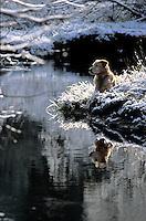 Dog resting near stream in winter in South Lake Tahoe, CA