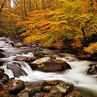 Stream in Fall - GSMNP