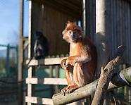 2017-01-18 - Monkey Haven