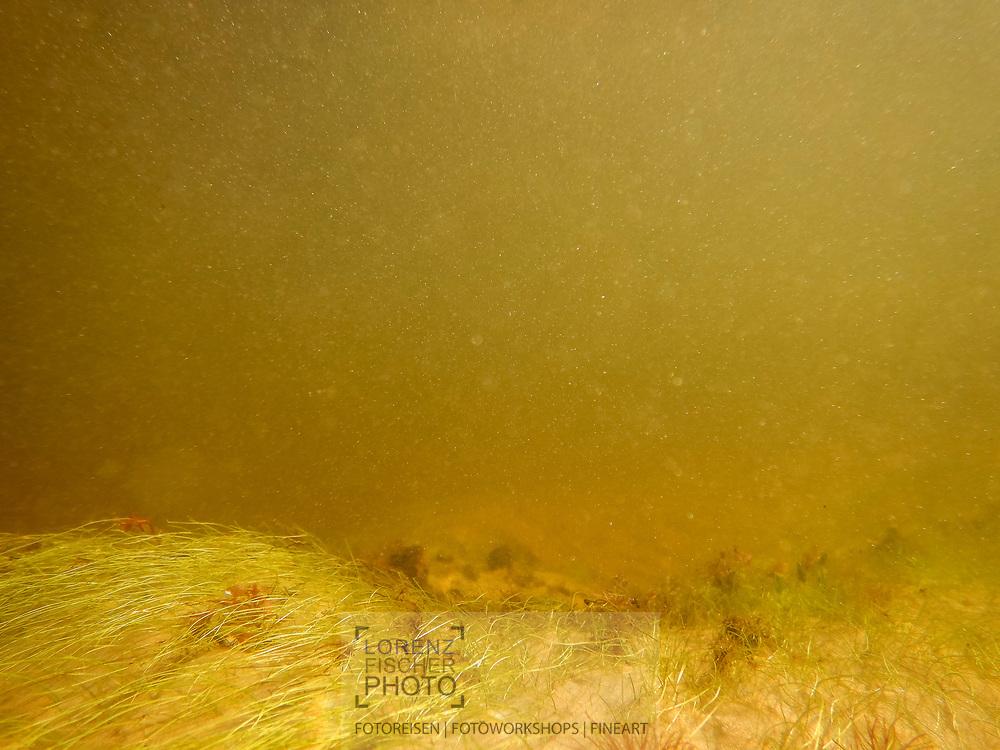 Underwater landscape in a small tributary to the Rio Negro, Pantanal, Mato Grosso do Sul, Brazil