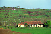 "Outside the village Mad in Tokaj: a vineyard on a hill slope with a winery farm building. A humorous inscription on a wall: ""Hollywood"". Mad is one of the main villages in the Tokaj district.  Credit Per Karlsson BKWine.com"