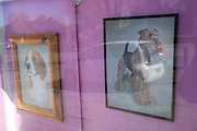 Framed pictures in a local dog groomers window on 14th April 2020 in Birmingham, England, United Kingdom. Dog grooming refers to both the hygienic care and cleaning of a dog, as well as a process by which a dogs physical appearance is enhanced for showing or other types of competition. A dog groomer is a person who earns their living grooming dogs.
