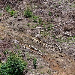 """""""Desmatamento (Paisagem) fotografado no Caparaó, Espírito Santo -  Sudeste do Brasil. Bioma Mata Atlântica. Registro feito em 2018.<br /> ⠀<br /> ENGLISH: Deforestation photographed in Caparaó, Espírito Santo - Southeast of Brazil. Atlantic Forest Biome. Picture made in 2018."""""""