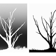 Cross processed black and white photography of a silhouetted tree and moon sequence.