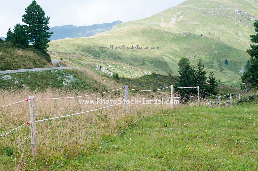 Electrical cow fence separates the grazing meadow from the natural park. Isskogel mountain peak near Gerlos, Tyrol, Austria