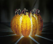 The power inside your five-a-day: Photographer creates amazing illuminated images by placing electrodes inside FRUIT<br /> <br /> You may have created a battery using a potato or a lemon in a physics class at school.<br /> <br /> But one artist has taken the humble experiment a step further by using an array of fruit from limes to apples in order to make self-powered lights that light up his photographs.<br /> <br /> Caleb Charland uses nails hidden inside the fruit which are connected with copper to make batteries, inspired by the classic potato classroom experiment.<br /> The artist, from Bangor, Maine, transforms the fruit into electrochemical cells, which he arranges artistically before taking long-exposure photographs of his work in a bid to highlight the potential of sustainable energy.<br /> <br /> The fruit itself provides enough light to illuminate the photographs, which are all taken in the dark.<br /> <br /> He writes on his website: 'To understand the world and to profit from it one must interact with it, one must experiment.<br /> <br /> 'My practice as an artist combines a scientific curiosity with a constructive approach to making pictures.<br /> <br /> 'I utilise everyday objects and fundamental forces to illustrate experiences of wonder.<br /> <br /> Mr Charland explained that his Back to Light project 'expands upon a classic grade school science project, the potato battery.<br /> <br /> 'By inserting a galvanised nail into one side of a potato and a copper wire in the other side a small electrical current is generated. The utter simplicity of this electrical phenomenon is endlessly fascinating for me.'<br /> <br /> He believes that the fact that so many people have conducted the experiment when they were young speaks to a common curiosity that humans have in understanding how the world works 'as well as a global concern for the future of Earth's energy sources.<br /> <br /> 'My hope is that these photographs function as micro utopias by suggesting and illustrating the endless possibilities of alternative and sustainable energy production,' he said.<br /> <br /> 'The cycle t