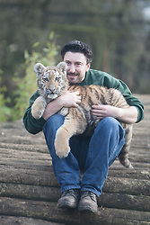 © London News Pictures. 04/02/2013.Head of Large Carnivore Section Ben Warren holds 5 month old Siberian tiger cub Arina. Howletts Wild Animal Park in near Canterbury, Kent, officially announces endangered Siberian cubs debut. Siberian or Amur tigers are endangered in the wild and it is estimated that only 400 remain. Picture credit should read Manu Palomeque/LNP