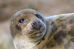 July 21, 2019 - Seal (Credit Image: © John Short/Design Pics via ZUMA Wire)