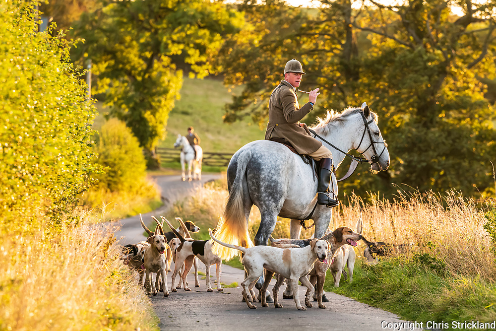 Drinkstone, Hawick, Scottish Borders, Scotland, UK. 22nd September 2021. The Duke of Buccleuch Foxhounds, a mounted gun pack, flush foxes from cover to guns, in the rough ground of the Southern Uplands.