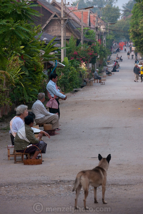 Luang Prabang, Laos. Villagers kneel outside their homes, waiting to offer sticky rice or cereal bars to passing monks. Every morning at dawn, Buddhist monks walk down the streets collecting food alms from devout, kneeling Buddhists, and in the main part of Luang Prabang, from some tourists. They then return to their templess (also known as wats) and eat together. This procession is called Tak Bat, or Making Merit.
