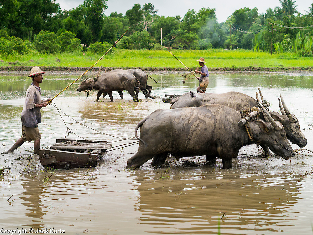 14 JUNE 2013 -  PANTANAW, AYEYARWADY, MYANMAR:  Farm workers near Pantanaw, Myanmar use water buffalo, also called carabao, to till a rice paddy. Much of the agricultural industry in Myanmar still uses human and animal power to get work done, compared to neighboring Thailand, where the most of the work is mechanized. After decades of military mismanagement that led to years of rice imports, Myanmar (Burma) is on track to become one of the world's leading rice exporters in the next two years and could challenge traditional rice exporter leader Thailand. Political and economic reforms have improved rice yields and new mills are being built across the country. Burmese eat more rice than any other people in the world. The average Burmese consumes 210 kilos of rice per year and rice makes up 75 percent of the diet.  PHOTO BY JACK KURTZ