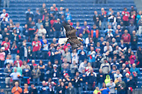 "NASHVILLE, TN - OCTOBER 25:  Bald eagle ""Challenger"" of the Tennessee Titans flies over the field before a game against the Atlanta Falcons at Nissan Stadium on October 25, 2015 in Nashville, Tennessee.  The Falcons defeated the Titans 10-7.  (Photo by Wesley Hitt/Getty Images) *** Local Caption ***"