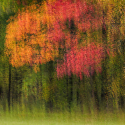 Multiple exposure montage, the radiant colors of autumn. Imaged placed as Highly Commended for Photographic Excellence in 2015 Share the View international nature photography competition by Audubon Society of Greater Denver.