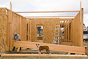 A carpenter frames a house while a dog stands guard at a new housing development in Tacoma, Washington.