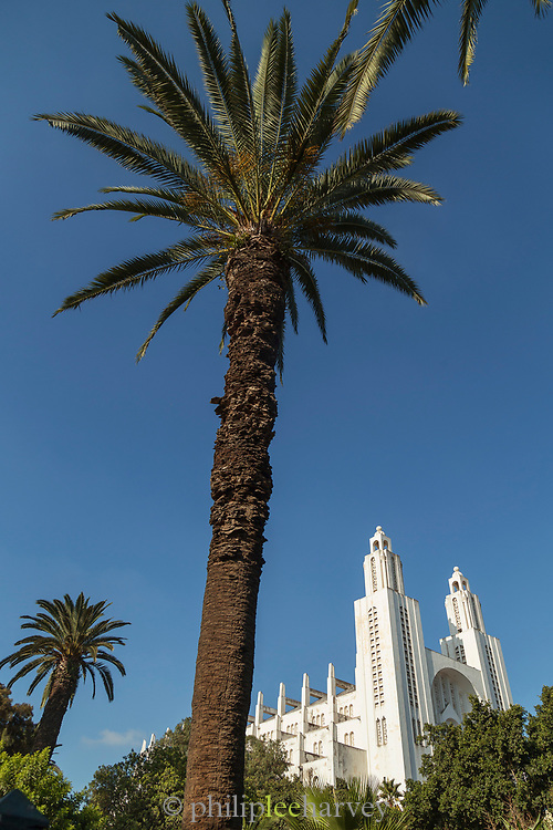 Palm tree near Casablanca Cathedral in Morocco