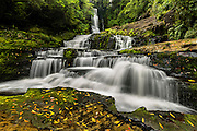 Autumn leaves amongst the Mclean Falls, in the Catlins, New Zealand