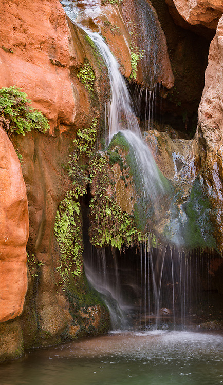Royal Arch Creek trickles into Elves Chasm, supporting a hanging garden of moss and maidenhair fern, Grand Canyon National Park, © David A. Ponton [This is a composite of four images, making a very large file suitable for very large prints.]