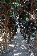 tree corridor in a park