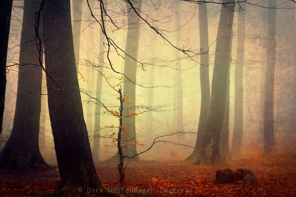 Foggy & moody autumn forest. Textured photo<br /> Prints & more: http://society6.com/DirkWuestenhagenImagery/Forest-Glow_Print