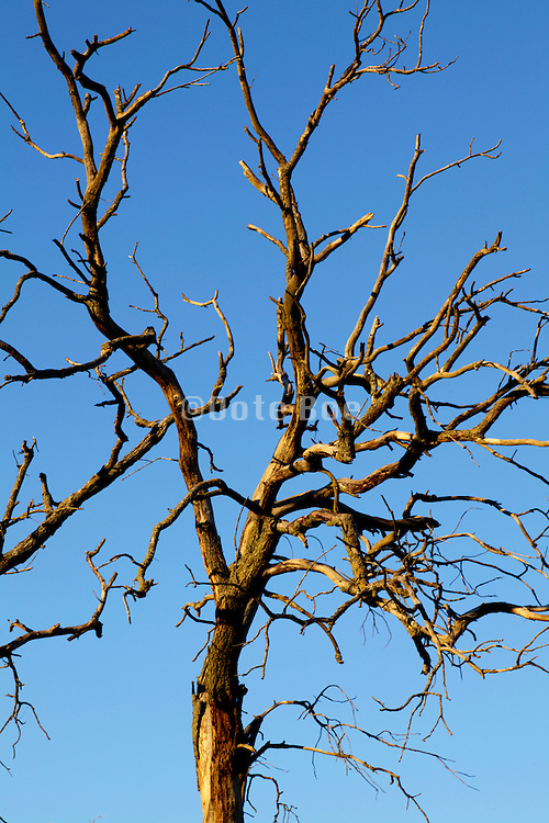 twigs of a dead tree against a blue sky