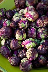 Purple Brussel Sprout 'Red Rubine' in a green bowl. Brassica oleracea
