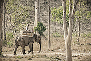 Elephant and mahout.