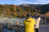 Teilnehmende eines Fotoseminars beim Fotografieren von Wolf und Bär im Gemeinschaftsgehege; Tierpark Goldau, Kanton Schwyz, Schweiz<br /> <br /> Participants in a photo seminar photographing wolf and bear in the communal enclosure; Goldau Zoo, Canton Schwyz, Switzerland