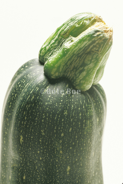 close up of the end of a zucchini
