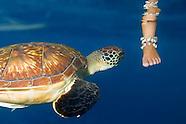 Diving the Similan Archipelago, Thailand