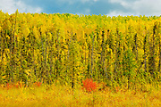 Boreal forest in autumn<br /> Meadow Lake<br /> Saskatchewan<br /> Canada
