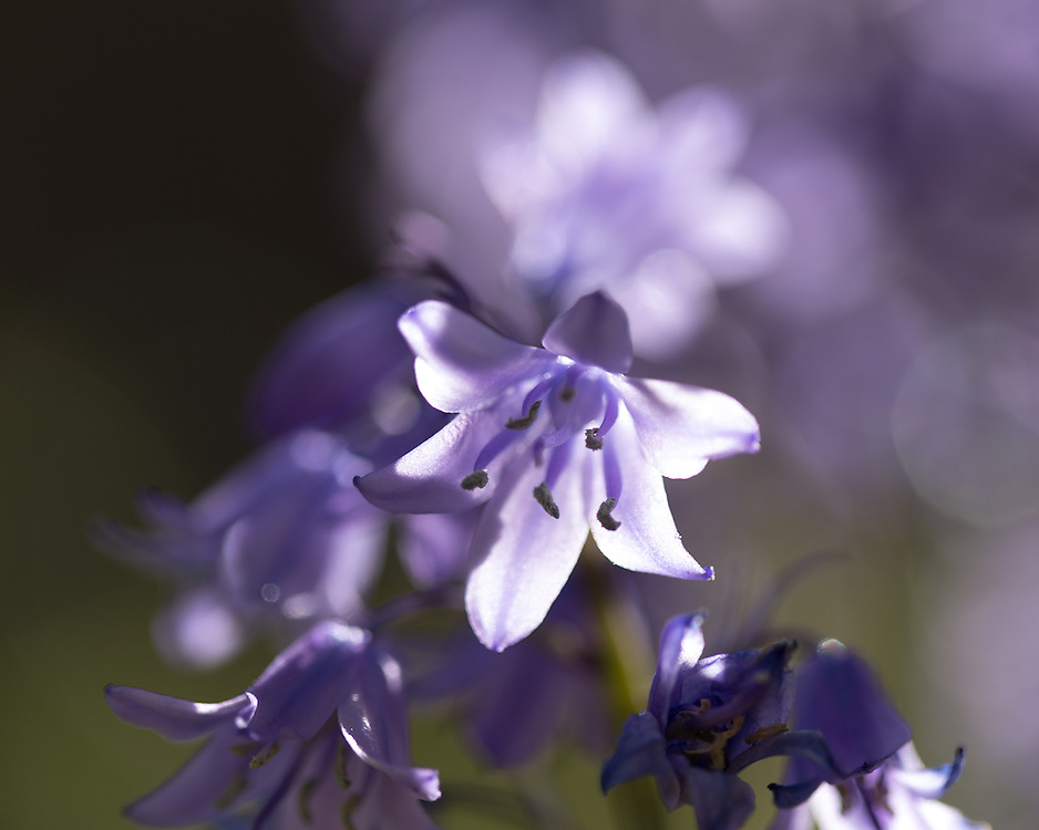 Floral Photography by Jason Swain