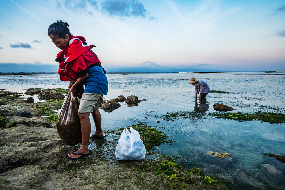 A mother and son collect sea urchins among the seagrass beds in Indonesia. Millions people in developing nations rely on nutrition supported by seagrasses.