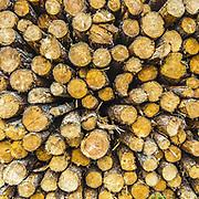 Grayling Lumber