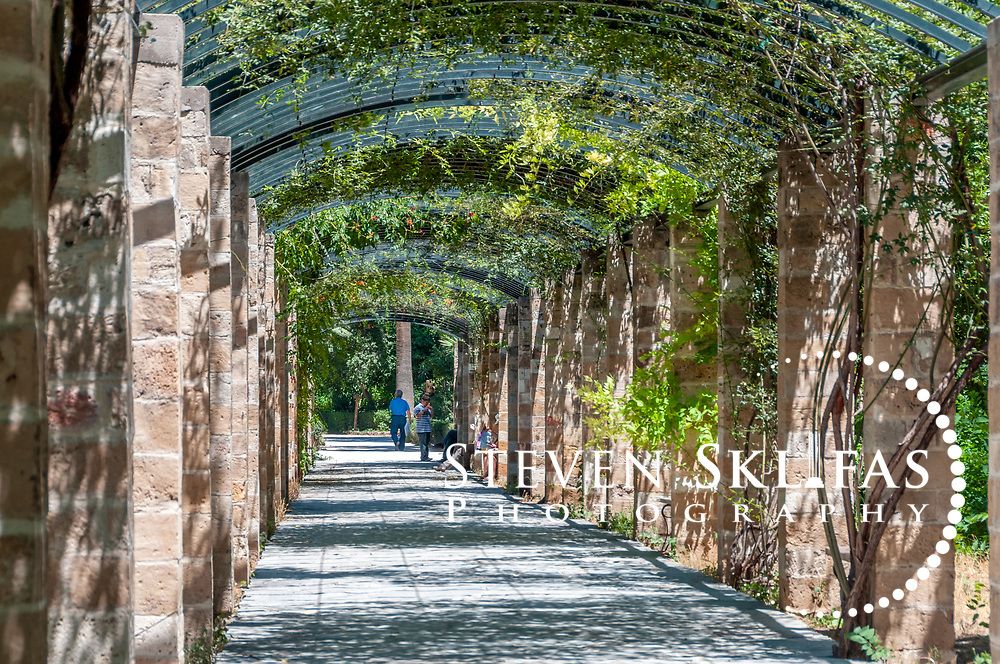 Athens. Greece. Delightful Pergola of Rosa Banksiae at the National Gardens, a vast green refuge and oasis in the centre of Athens.
